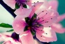 Blossom . Flowers