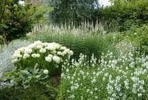 białe ogrody