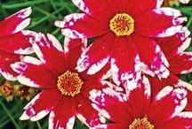 Flowers in Zone 6