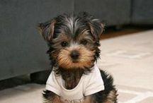 Doggie ♥ Love