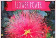 Flower Power / Flower