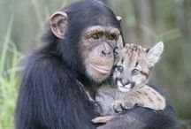 Animals together