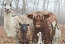 Sheep & Alpaca