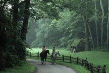 Village Horses