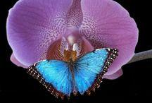 Butterflies / by Maritza Gutierrez