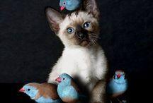 furry cuties / cute kitties