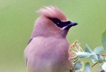 birds of a feather / birds