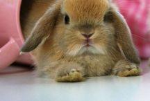 Thumper & EB / rabbits and bunnies