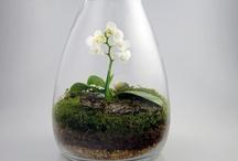 terrarium / all about terrariums