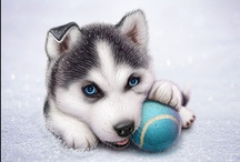 Cute Husky Photos Only / Husky's seem to be big on Pinterest. So we have made an entire new Board, just for Cute Husky Photos Only. Enjoy :o) - Posted by PoolAndSpa.com