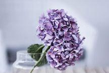 Flowers / by THOLCANA Denmark