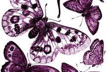insecta / ćmy, motyle chrząszcza, ważki i inne