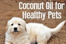 Natural petcare ideas / A healthy pet is a happy pet. :) / by PETacular Magazine
