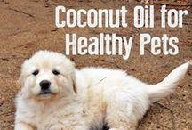 Natural petcare ideas / A healthy pet is a happy pet. :)
