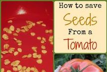 Family Activities - Gardening Hacks / A board dedicated to nothing, but backyard gardening and container gardening. Grow your own fruits and vegetables without spending a lot of money!