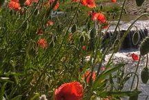 CZ: ,,Štěpánov nad Svratkou,, / ...nejkrásnější údolí na světě, které je mému srdci nejblíž....
