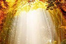 ,,AMBER  AUTUMN  COLOURS,, / Jantar - je jako podzim, má stejné barvy a všechny jsou nádherné....Existuje široká škála osmi barevných odstínů - žlutý,oranžový,červený,bílý,hnědý,modrozelený a černý.Dále modrý-sicilský a Valchovit - neprůhledná odrůda z českých zemí. Nejkrásnější a nejcennější je červený jantar z oblasti Chiapas v Mexiku. Preventivně je jantar velmi účinným ochráncem zdraví na všech úrovních.