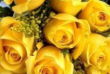 Má kytku žlutejch květů - snad růží, co já vím... / Jedu vám večer stezkou  dát koňům k řece pít,  vtom potkám holku hezkou  až jsem vám z koně slít. Má kytku žlutejch květů -  snad růži co já vím? Znám plno hezkejch ženskejch k světu,  ale tahle hraje prim....Waldemar Matuška