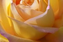 Nádherná -  nádherná -  nádherná /  Nádherná, nádherná, nádherná, nádherná lásko postůj chvilku dýl, Ty jsi bílá tečka nejněžnějších vět, Ty jsi květ, co sem slét, Tys můj šestý světadíl.   Šla městem, pestrý šátek za ni vlál a ve vlasech ji zahořela růže já chvíli šel jsem za ní,  chvilku vedle ní jsem stál a v rozpačitém srdci oheň vzplál.   Teď v zahradě snů svoji růži mám a sám na její slávu verše píšu, na bílém břehu touhy stojí naší lásky stan a v něm tu svoji růži objímám.....Pavel Novák