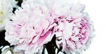N&K Wedding - Jeremy A Stylist / Inspiration/ideas