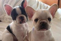 Super cuteness / Cute lil animals that make me smile :)