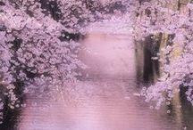 JAPAN: Happylands