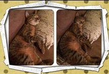 Cuties / Cute cats