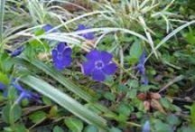 花 / 仕事中に見つけた花たちです