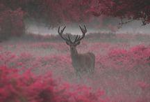 Autumn backgrounds ♡