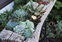 Gardening Ideas / Ideas for a small, beginners cottage garden