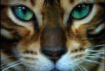 I Love... Cats!