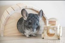 Toys for Chinchillas
