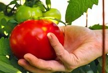 Gemüsegarten (Vegetable Garden)
