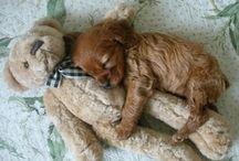 Hundar och tillbehör / Dogs and funny things to them