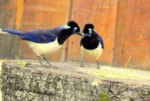 Aves...Eu vejo pássaros... / Aves de todos os gêneros