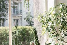 plantsplantsplants