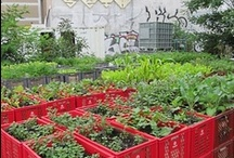 Urban Gardens Ideas