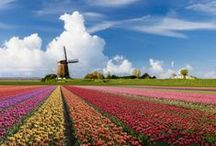 Holland / Dutch celebrity, tradition and typical Dutch dishes