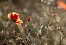 Inspiring photos & ideas / Beautiful colors and nature - inspiring nature photography.