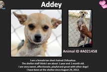 Redlands Animal Shelter - Adoptable Pets