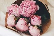 All about peonies