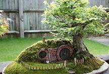Fairy Gardens / little gardens