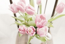 flowers / by susan sobon/