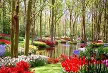 Flower Gardens / by Carolyn Prescott