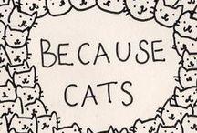 [ meow ]