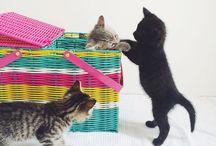 Cat gato / Cat house