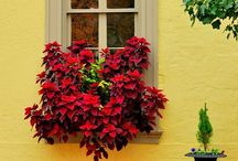 Window boxes / When we were in Europe, it was just so beautiful seeing all the flower boxes.