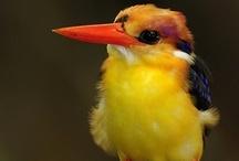 とり birds / I like rounded birds, especially kingfisher カワセミ/翡翠