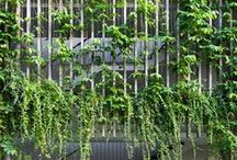 Plants in architecture