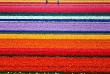.:. cores .:.